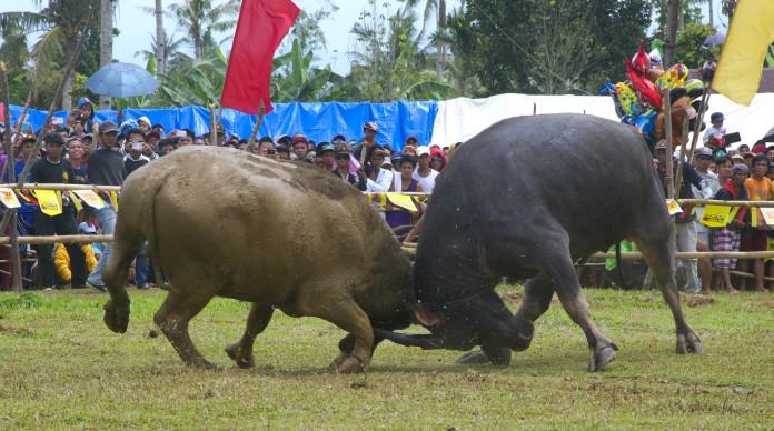 Turogpo Festival